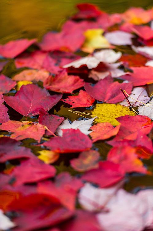 Fall color along the Dead River in Marquette, Michigan on Michigan's Upper Peninsula.