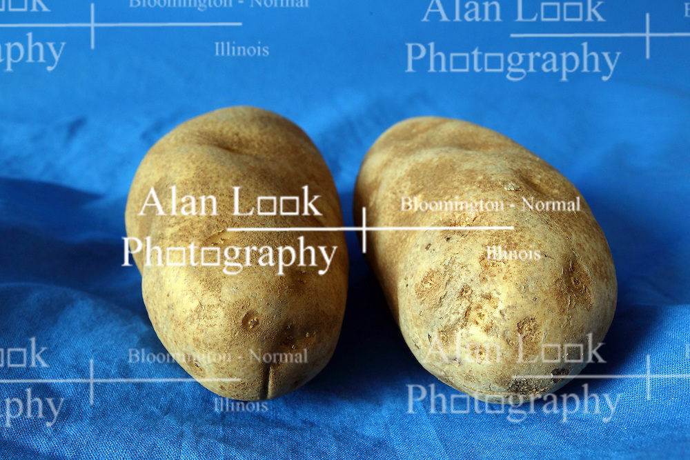 18 February 2016:   Studio - Potato on blue #028.  A pair of baking potatoes shot in a studio on a blue background.
