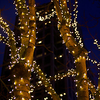 Christmas light treatment to some trees in downtown add to a festive atmosphere