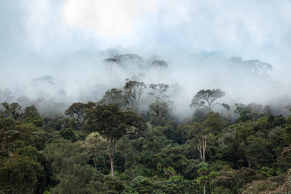 Misty scene, Asaro valley, Papa New Guinea