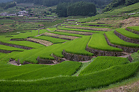 """Onigi Hasami Rice Terraces - Curving their way up the mountain slopes, the terraced rice fields at Onigi Hasami Tanada are the result of local farmers' efforts to make the best use of their land in this mountainous area.<br /> Water is of vital importance for plants and that includes rice so the rice terraces form an ecosystem and also protect the inhabitants of Hasami Nagasaki.  The town is also famous for its pottery and ceramics.  The rice terraces here have been named as one of """"Japan's 100 Best Terraced Rice Fields""""."""