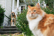 A cat and a dog look out towards the street from the stairs and front porch of a house on Phinney Ridge, Seattle, Washington.