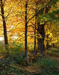 Fall foliage in Jaffrey, New Hampshire.