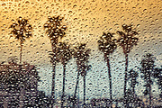 Image of palm trees in the rain, San Pedro, California, America west coast by Randy Wells