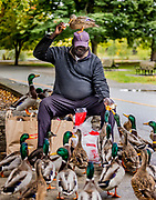 """Raymond Loyuk, 67, of Seattle, feeds bread to ducks at Green Lake Park on Wednesday. """"They come from the lake; they know me. You can see there is no fear. It is a matter of trust,"""" Loyuk said. He said he tries to come to feed the ducks at Green Lake on a regular basis. (Daniel Kim / The Seattle Times)"""
