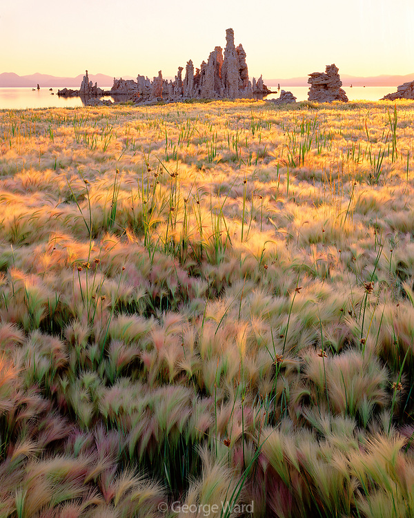 Wild Barley and Tufa Formations, Mono Lake, Mono Basin National Forest Scenic Area, California