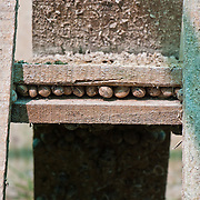 photographs of the snail farm of http://onefoot.gr in Marathon, Greece