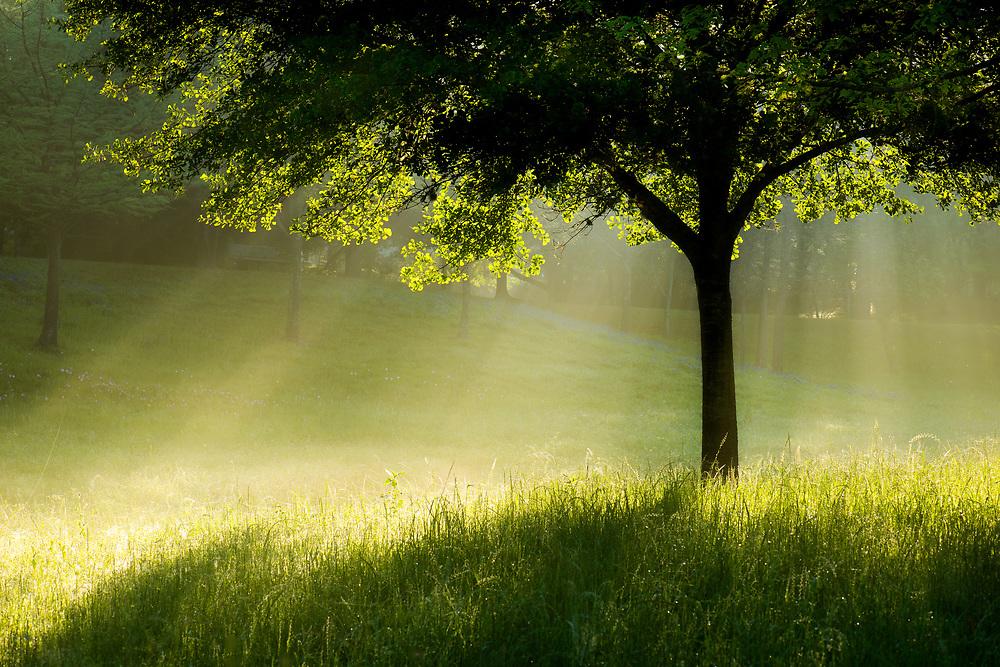 Terry Hershey Park spring morning, Houston, Texas