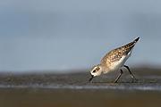 Wildlife photographs Texas, USA