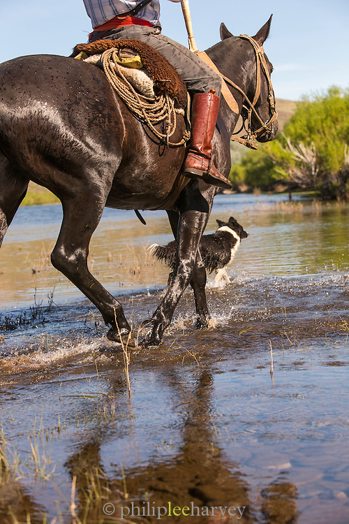 Gaucho on horseback and dog crossing stream, Estancia Huechahue, Patagonia, Argentina, South America