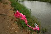 Flamingo inflatable swimming aid burst on the bank of the river Orbeau on 28th August 2007 in Lagrasse, France. Discarded plastic toys are both an eyesaw and an ecological problem.