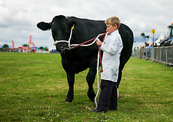© Licensed to London News Pictures.29/07/15<br /> Borrowby, UK. <br /> <br /> A young boy stands with his cow during judging at the Borrowby Country Show and Gymkhana in North Yorkshire.<br /> <br /> Photo credit : Ian Forsyth/LNP