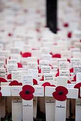 © Licensed to London News Pictures. 07/11/2012. London, UK. Crosses with poppies bearing messages are seen in the Field of Remembrance at Westminster Cathedral in London today (07/11/12). Photo credit: Matt Cetti-Roberts/LNP