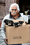 A Mexican man holds a box of puppies during the annual blessing of the animals on the feast day of San Antonio Abad at Oratorio de San Felipe Neri church in the historic center of San Miguel de Allende, Guanajuato, Mexico.