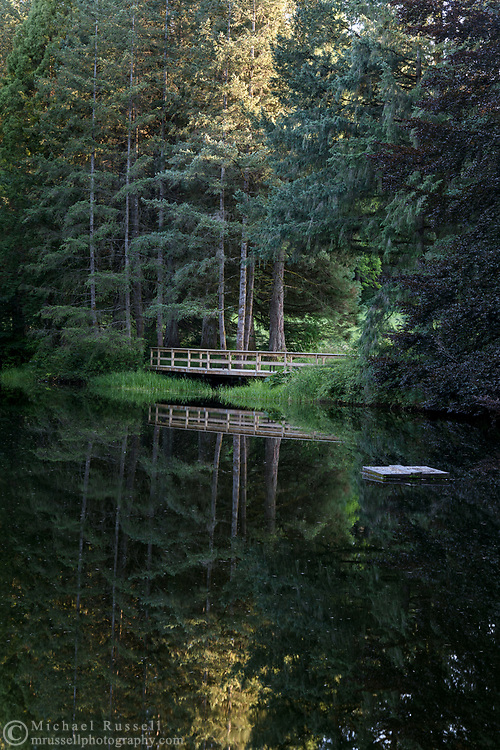 Evening reflections at the pond at Godwin Farm Biodiversity Preserve in Surrey, British Columbia, Canada