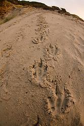 Sandfly Point, Otago Peninsula, Penguin Tracks