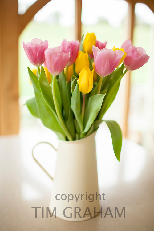 Jug of tulips, Tulipa, in a country kitchen in springtime in Swinbrook in the Cotswolds, Oxfordshire, UK