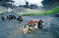 A Tibetan family sit together and rest with their Yak by the side of road.
