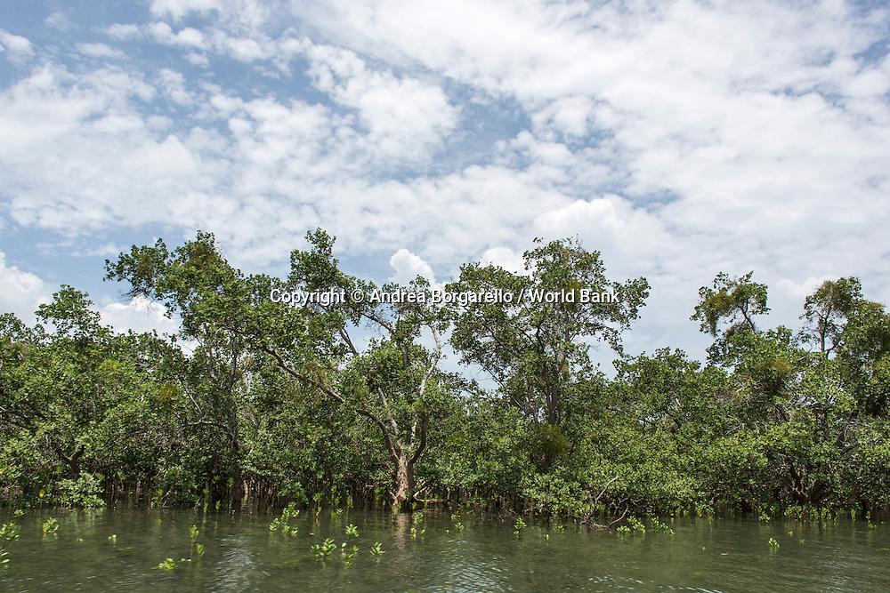 Quirimbas National Park, Mozambique.<br /> Marine area, Ibo Island.<br /> Local Mangroves.