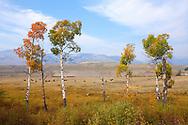 Manada de bisontes en Lamar Valley, Yellowstone NP, Wyoming (Estados Unidos)