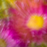 fine art photograph with two flowers and olive grass - movement feel to it and colors that pop