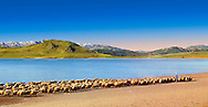 Shepherds & their sheep on the shotre of Lake Van, Turkey 5 .<br /> <br /> If you prefer to buy from our ALAMY PHOTO LIBRARY  Collection visit : https://www.alamy.com/portfolio/paul-williams-funkystock/lakevanturkey.html<br /> <br /> Visit our TURKEY PHOTO COLLECTIONS for more photos to download or buy as wall art prints https://funkystock.photoshelter.com/gallery-collection/3f-Pictures-of-Turkey-Turkey-Photos-Images-Fotos/C0000U.hJWkZxAbg