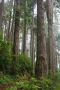 Damnation Creek Hike at Del Norte Coast Redwoods State Park