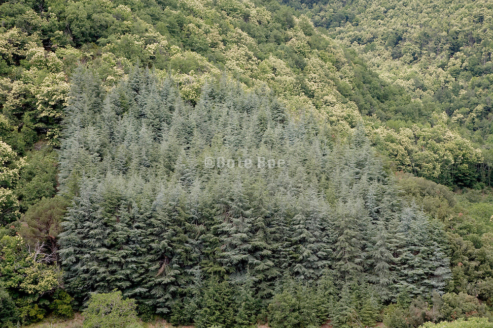 an interesting group of different trees among a overview of woodland