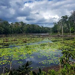 """""""Lagoa (paisagem) fotografado em Linhares, Espírito Santo -  Sudeste do Brasil. Bioma Mata Atlântica. Registro feito em 2016.<br /> <br /> <br /> <br /> ENGLISH: Lagoon Landscape photographed  in Linhares, Espírito Santo - Southeast of Brazil. Atlantic Forest Biome. Picture made in 2016."""""""