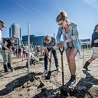 """Nederland, Amsterdam, 7 mei 2016.<br /> Startsein van planten  eerste wijnstokken bij Sloterdijk.<br /> Altijd al gedroomd van een wijngaard maar de stad nog niet kunnen loslaten? Zelf wijn willen maken en niet weten waar te beginnen? Wil je de stad groener, leefbaarder en mooier maken? Of wil je lekker actief bezig zijn in de natuur met anderen? Zomaar wat redenen om je aan te sluiten bij de Amsterdamse Stadswijngaard Wijn van Bret.<br /> Wijn van Brette Sloterdijk biedt ruimte aan 70 enthousiaste wijnliefhebbers.<br /> Je kunt meedoen door per oogst 10 wijnstokken te leasen voor Euro 225,-. Deze wijnstokken zullen ongeveer 10 flessen wijn opleveren. De wijnstokken zullen in Mei 2016 worden aangeplant.Na de oogst (voor de huidige inschrijvers in 2018) worden je druiven geperst, vergist, bewaard en uiteindelijk neem je je eigen flessen wijn mee naar huis. Je kunt je stukje wijngaard laten onderhouden, maar ook meehelpen met alle stappen die nodig zijn om tot een goede wijn te komen zoals het bijhouden van de grond, de """"groene oogst"""", en de oogst van de druiven zelf. Je maakt in ieder geval het grandioze oogstfeest mee en je naam wordt vermeld in de """"Hall of Bret"""" (Wijn van Bret – Hall of Fame). Je kunt na een cursus wijnmaken ook zelf actief meedoen met het vinificeren van de wijn; onder begeleiding van ervaren wijnmakers zal het vinificatie proces worden uitgevoerd. <br /> <br /> Foto: Jean-Pierre Jans"""