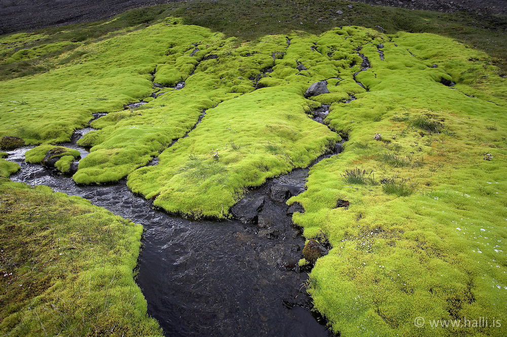 Green moss at Skuggafjallakvisl in the highlands of Iceland - Grænn mosi við Skuggafjallakvísl á leið að Langasjó