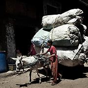 """Recolector """"Zabbaleen"""" con su carro vuelve a Mokattam cargado de sacos con desperdicios del centro del El Cairo .En medio del barrio de Manshiet Nasr a las afueras de El Cairo esta situado el asentamiento de Mokattam conocido como la """"Ciudad de la Basura"""" , está habitado por los Zabbaleen ,una comunidad de unos 45.000 cristianos coptos que viven desde hace varias décadas de reciclar los desperdicios que genera la capital egipcia: plástico, aluminio, papel y desechos órganicos que transforman en compost . La mayoría forman parte de la Asociación para la Protección del Ambiente (APE) una ONG que actúa en el área, cuyos objetivos son proteger el medio ambiente y aumentar el sustento de las recuperadores de basura de El Cairo. Según la ONU, el trabajo que se realiza en Mokattam como uno de los diez mejores ejemplos del mundo en el mejoramiento medioambiental. El Cairo , Egipto, Junio 2011. ( Foto : Jordi Camí )"""