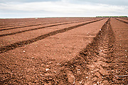 Agricultural field ready for sowing