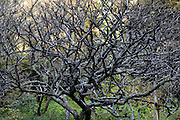 tree with many branches and twigs