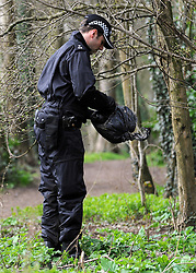 ©London News pictures. 21/03/11. Police search woods near the nightclub. A massive police hunt was underway in a forest last night as fears grew over the disappearance of a woman who has not been seen for two days. Sian O'Callaghan, 22, was last seen at a nightclub in Swindon. Sixty officers searched 4,500 acre Savernake Forest on the outskirts of Marlborough, Wiltshire, as they believe a call from her mobile phone was made from the area. Picture Credit should read Stephen Simpson/LNP