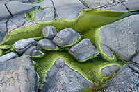 Pattern of rock and algae in Långviksskär.<br /> Stockholm Archipelago, Sweden