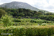 View looking south across the Kitchen Garden area in The Victorian Walled Garden at Kylemore Abbey. Only plants and flowers that were introduced to Ireland before 1901 are used in the gardens. The 6 acre garden is to the west of the Abbey originally known as a castle when it was built by Mitchell and Margaret Henry in the 1850's. The garden is on a south slope at the foot of Duchruach Mountain and facing Diamond Hill. It was chosen as the warmest and brightest spot on the estate with a mountain stream providing water. It is now a Benedictine community; open seven days a week all year round. The Abbey is located in Connemara in the west of Ireland. August