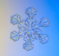 Real snowflake photographed in Anchorage, Alaska