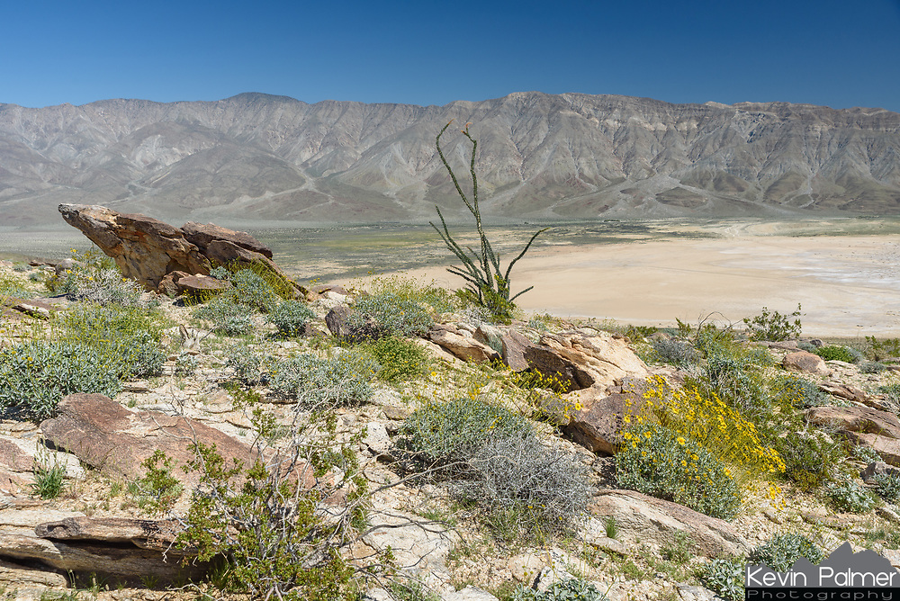 This was the view from the lower slope of Coyote Mountain with Clark Dry Lake and the Santa Rosa Mountains in the distance.