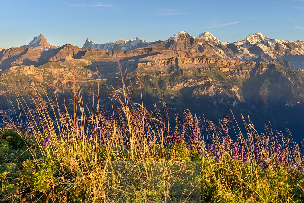 Impressionen am Augstmatthorn (2137) oberhalb des Brienzersees an einem späten Sommertag Ende August. Blick in die Berner Alpen und zu Eiger, Mönch und Jungfrau.