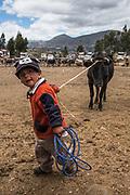 Boy leading cow<br /> Calpi animal market<br /> Parish of Riobamba, Chimborazo Province<br /> Andes<br /> ECUADOR, South America
