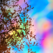 Pine branch reflected in rainbow-colored pool.