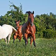 20110729 Anderson Quarter Horses
