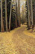 Dirt road through fall aspens, San Juan Mountains, Colorado