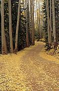 Dirt road through fall aspens, San Juan Mountains, Colorado
