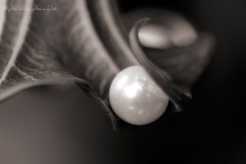 """Photoart """"Mother of Pearl Series""""<br /> <br /> Limited Edition of 79"""