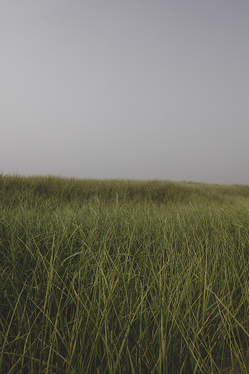 Grass and gray sky on a foggy afternoon in Nantucket.
