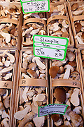 Mushrooms on sale at Viktualienmarkt food market in Munich, Bavaria, Germany