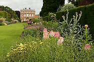 Cleome, Achillea and Cynara in the double borders at Newby Hall, Ripon, North Yorkshire, UK