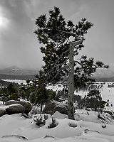 Lone Tree with a Winter Storm Approaching. Rocky Mountain National Park. Image taken with a Nikon D2xs camera and 14-24 mm f/2.8 lens (ISO 100, 14 mm, f/11, 1/125 sec).